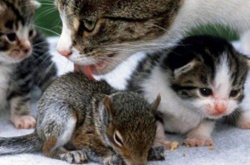 gatta che alleva cuccioli di altre specie